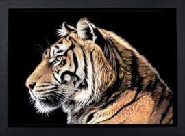 The Wild Side II by Darryn Eggleton