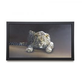 Spotted - Canvas by Paul James