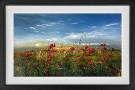 Poppy Love Original by Kimberley Harris